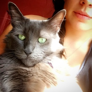 Safe Russian Blue in Torrance, CA US