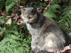 Lost Cat in Grove City, PA US
