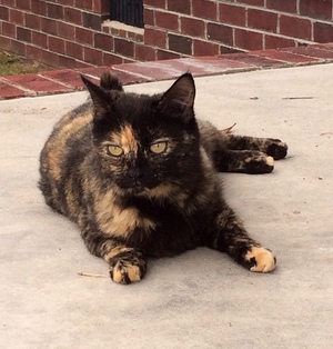 Safe Cat in Florence, SC US