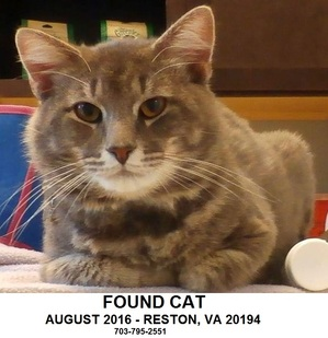 Safe Cat in Reston, VA US