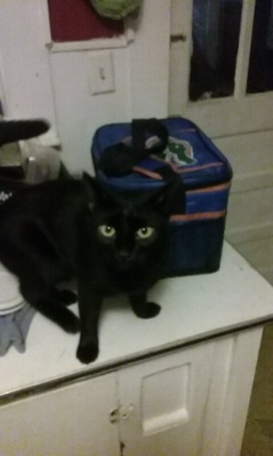 Safe Cat in Yadkinville, NC US