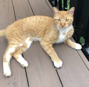 Safe Cat in Langhorne, PA US