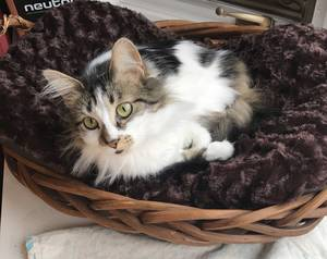 Lost Cat in Macungie, PA US