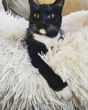 Safe Cat in King of Prussia, PA US