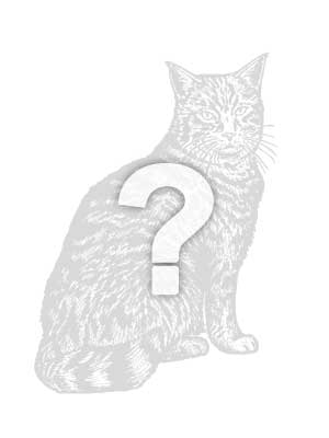 Lost Domestic Short Hair in Hanover, MD US