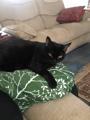 Lost Cat in Englishtown, NJ US