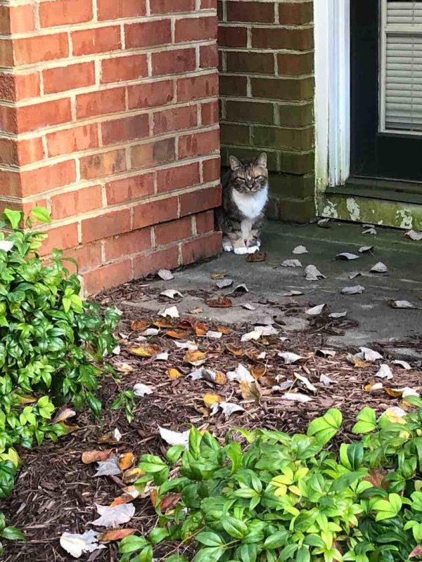 Found Cat in Alexandria, VA US