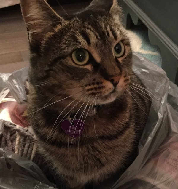 Lost Cat in Rockport, MA US