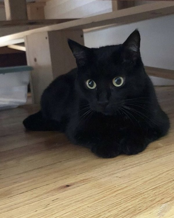 Lost Domestic Short Hair in Lake Hopatcong, NJ US