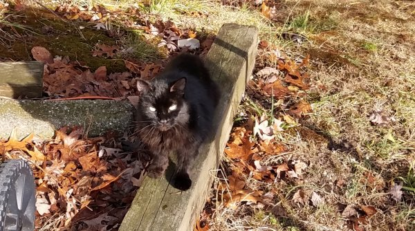 Found Cat in Tuckerton, NJ US