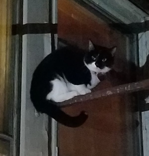 Found Cat in Jersey City, NJ US