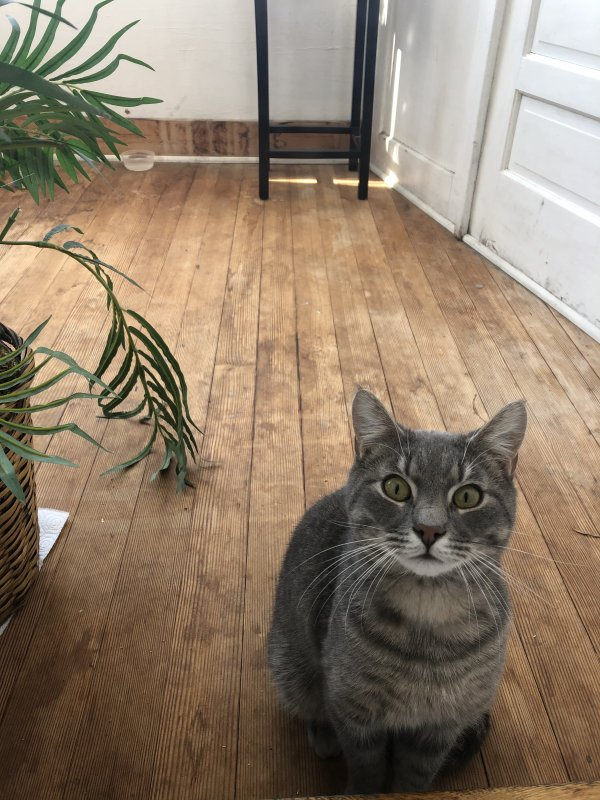 Found Cat in Montclair, NJ US