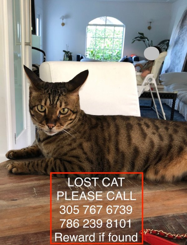 Lost Savannah in Miami Beach, FL US