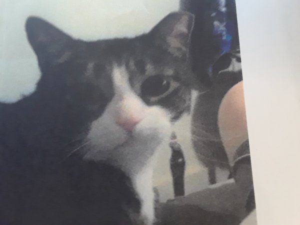 Lost Cat in Baltimore, MD US