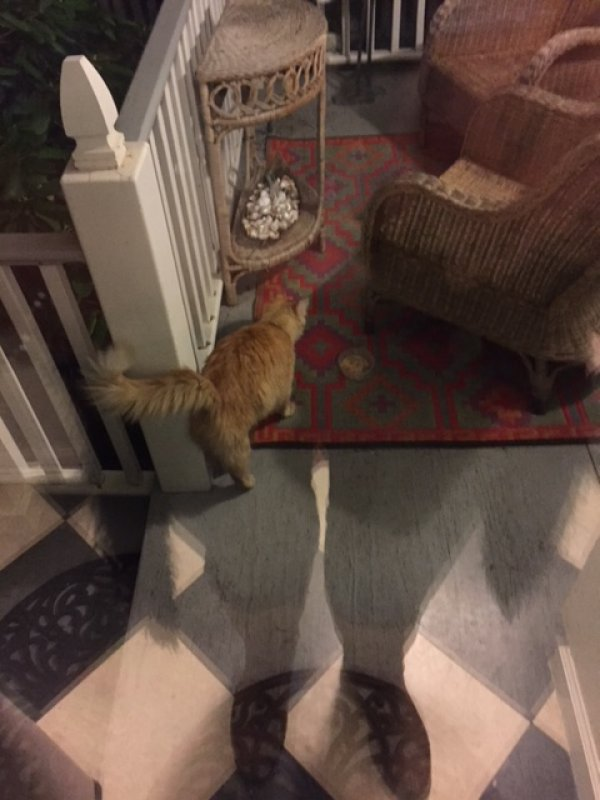 Safe Cat in Collingswood, NJ US