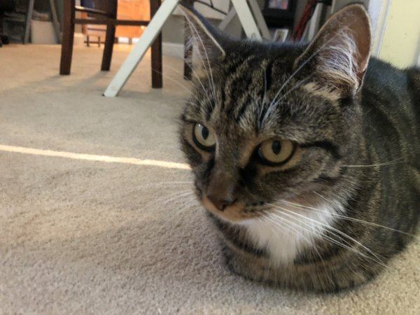 Lost Cat in Pawcatuck, CT US