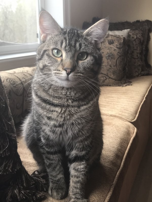 Reunited Lost Cat in Portland, OR US