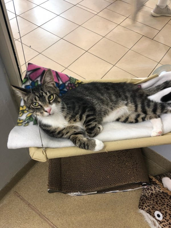 Lost Toyger in Long Branch, NJ US