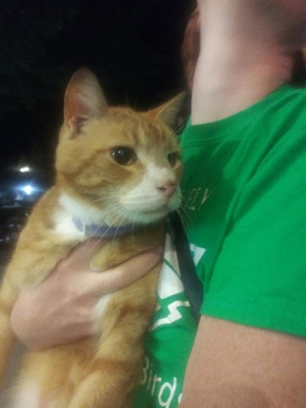 Found Domestic Short Hair in Wildwood, NJ US
