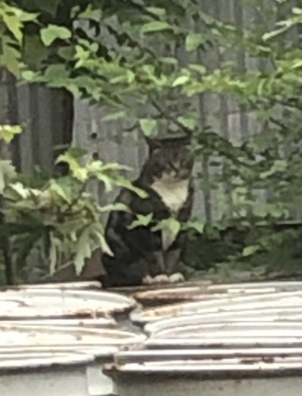 Found Cat in Brooklyn, NY US