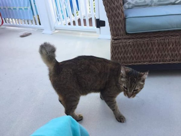Found Cat in Margate City, NJ US