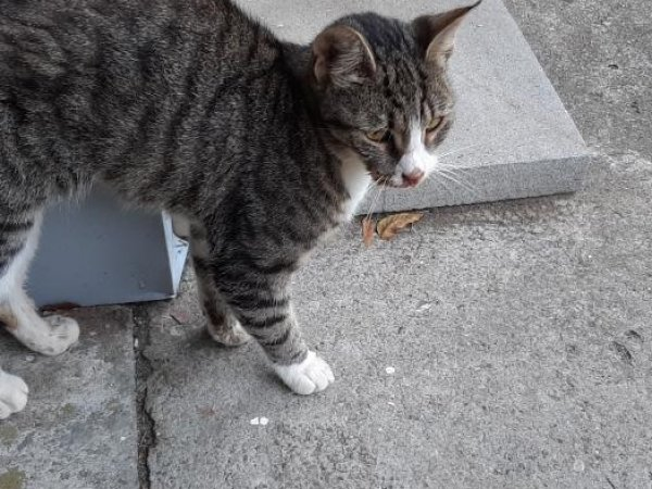 Found Cat in New Windsor, NY US