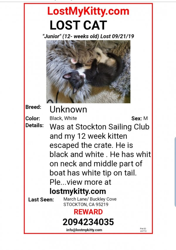 Lost Cat in Stockton, CA US