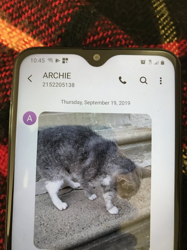 Found Domestic Short Hair in Lansdowne, PA US