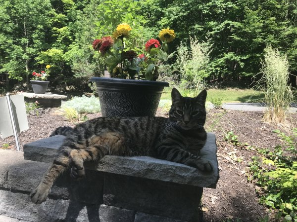 Lost Cat in Manlius, NY US