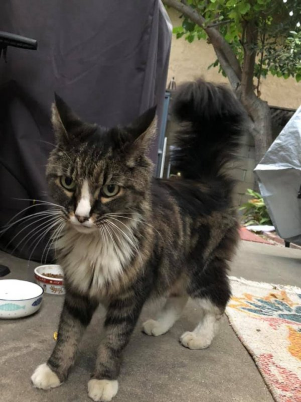 Found Cat in Sierra Madre, CA US