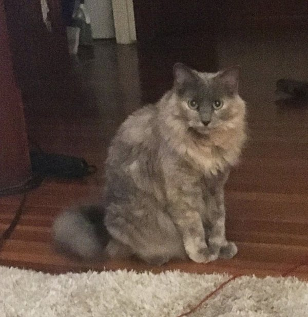 Lost Cat in West Hartford, CT US