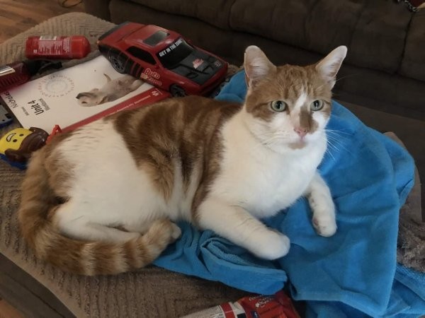 Stolen Cat in Richmondville, NY US