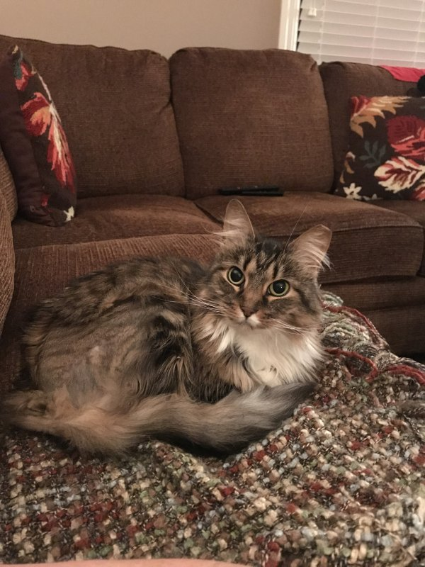 Lost Cat in Haledon, NJ US