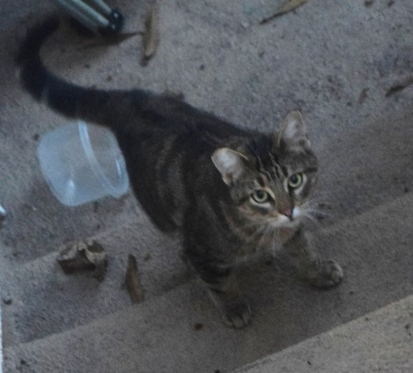 Found Cat in Los Angeles, CA US