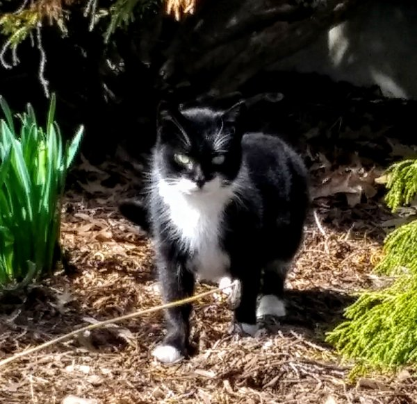 Found Cat in Quakertown, PA US