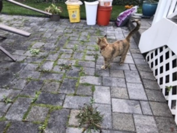 Found Cat in Wethersfield, CT US
