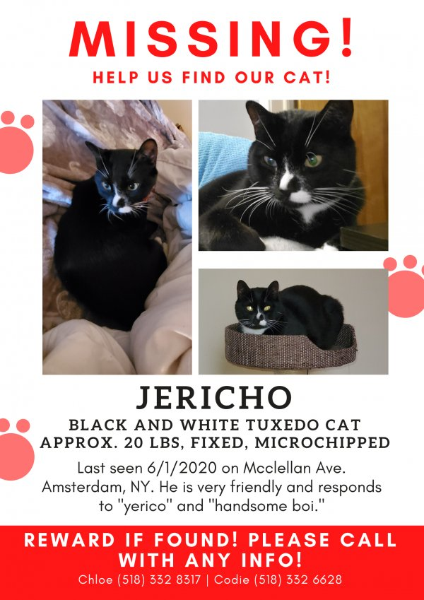 Lost Cat in Amsterdam, NY US