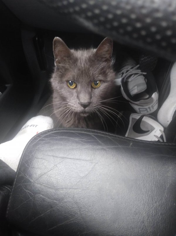 Lost Cat in Mountlake Terrace, WA US