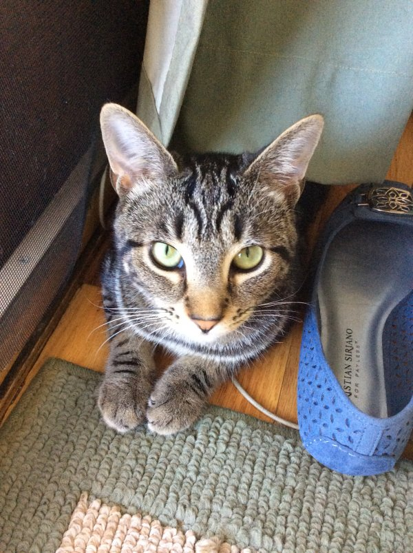 Lost Cat in Thornwood, NY US
