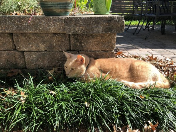 Lost Domestic Short Hair in Philadelphia, PA US