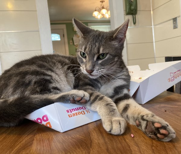Reunited Lost Cat in Canandaigua, NY US