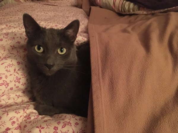 Lost Cat in Collingswood, NJ US