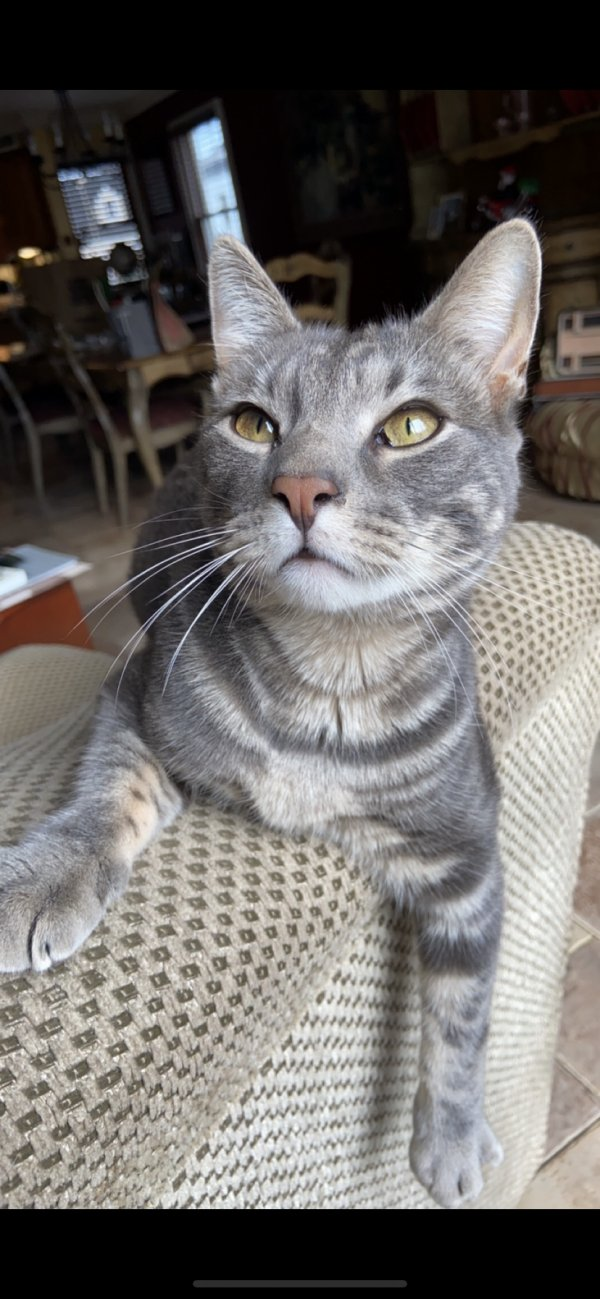 Lost Cat in Oceanside, NY US